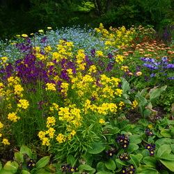 Harmony Blue Poppy Anemone, CITRONA Yellow Wallflower, Early Blue Forget-Me-Not, Supernova Blue Primrose, Lady Godiva Yellow Marigold, Licilia Violet Morocco Toadflax