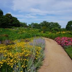 Russian Sage, Golden Showers Threadleaf Coreopsis, Flower Carpet Pink Supreme Groundcover Rose, Burgundy Candles Meadow Sage