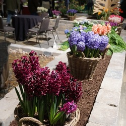 Woodstock Common Hyacinth, Boston Fern, China Pink Hyacinth, Purple Voice Hyacinth, Gypsy Queen Hyacinth, Miss Saigon Hyacinth, Chicago Hyacinth, White Pearl Hyacinth, Blue Star Hyacinth, Bloomstruck Hydrangea, Scarlet Pearl Hyacinth