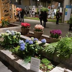 Boston Fern, China Pink Hyacinth, Miss Saigon Hyacinth, Bloomstruck Hydrangea, Scarlet Pearl Hyacinth