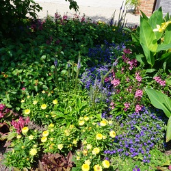 High Five Speedwell, Canna ), Angelface Perfectly Pink Angelonia, Magadi Electric Blue Edging Lobelia, Illusion Emerald Lace Sweet Potato, Mohave Yellow Strawflower, Spiky Pink Wheat Celosia