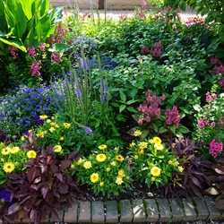 High Five Speedwell, Angelface Perfectly Pink Angelonia, Magadi Electric Blue Edging Lobelia, Illusion Emerald Lace Sweet Potato, Mohave Yellow Strawflower, Spiky Pink Wheat Celosia