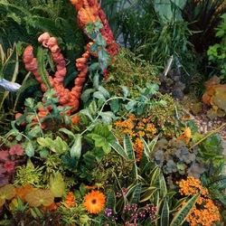 Coral Bells, Transvaal Daisy, Snake Plant, Wasabi Coleus, Mint Mocha Coleus, Enchantment Toadflax, Kiwi Fern Coleus, Calendiva Kalanchoa
