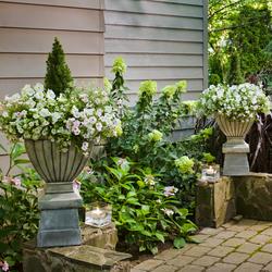 Superbells White Calibrachoa, Snow Princess Sweet Alyssum, Supertunia Vista Silverberry, Supertunia White Petunia, Vertigo grass, Lime Light Hydrangea
