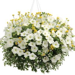 Early Bird: Flambe Yellow Strawflower, Supertunia White Petunia, Snowstorm Giant Snowflake
