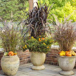 Vertigo Grass, Graceful Grasses Purple Fountain Grass, Luscious Goldengate Lantana, Chocolate Drop Coleus