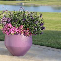 Supertunia Giant Pink Petunia, Supertunia Really Red Petunia, Rockin' Deep Purple Salvia, Meteor Shower Verbena, Pardon My Lavender Bee Balm, Supertunia Daybreak Charm Petunia