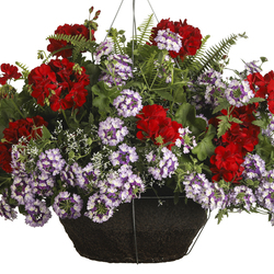 Kimberly Queen Fern, Boldly Dark Red Geranium, Superbena Sparkling Amethyst Verbena, Diamond Frost Spurge