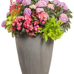 Let's Dance Moonlight Bigleaf Hydrangea, Surefire Rose Begonia, Proven Accents Pegasus Begonia, Sweet Caroline Light Green Sweet Potato, Dolce Appletini